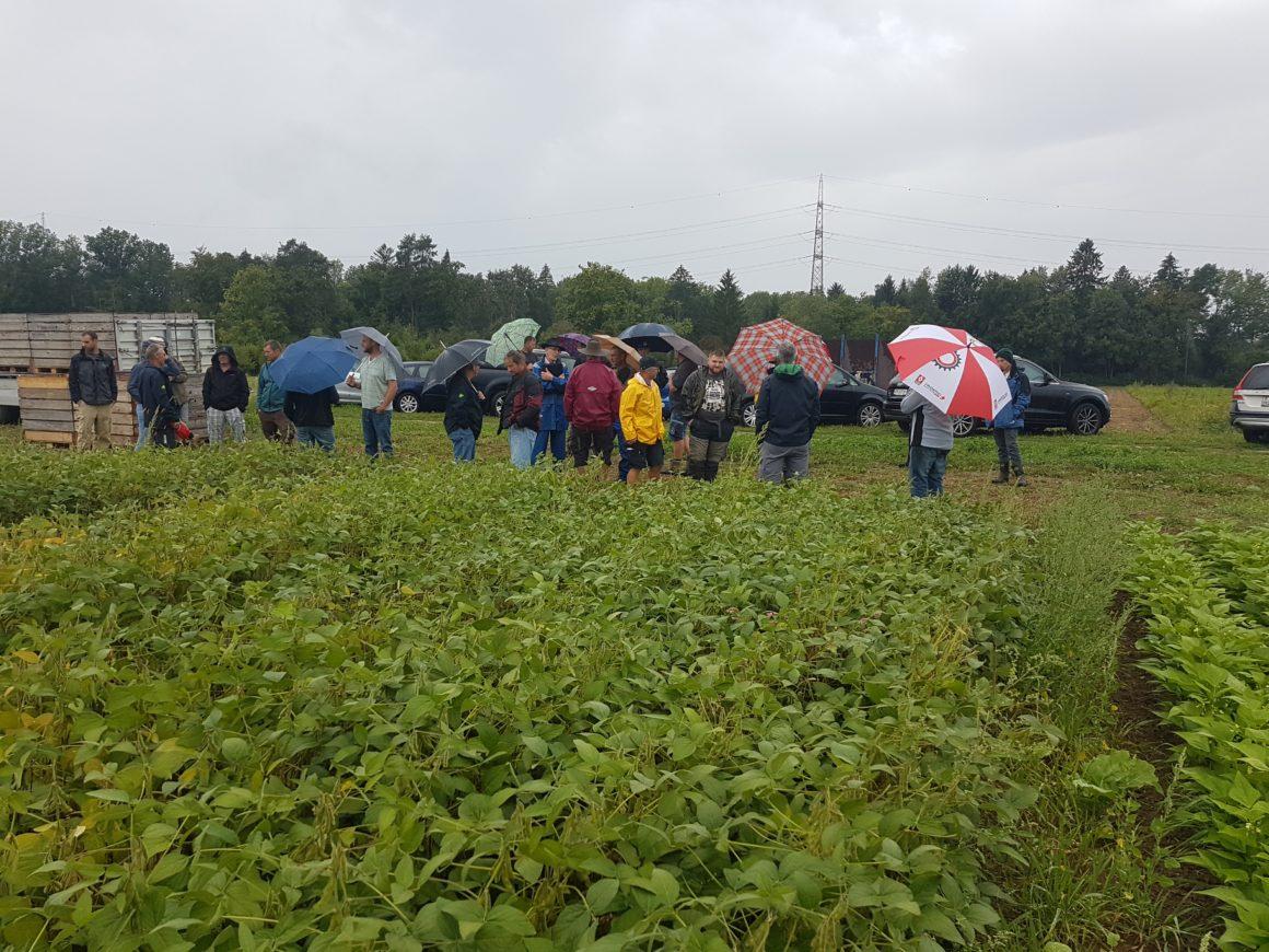 Visite de culture soja bio alimentaire et fourrager organisée par PROGANA
